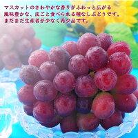 【ふるさと納税】勝央町産ぶどう『マスカットビオレ』(1.0kg以上)