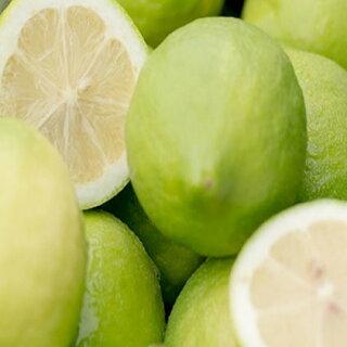 広島大長檸檬