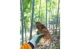 【ふるさと納税】A212 竹原 筍の水煮【960g(160g×6袋)】
