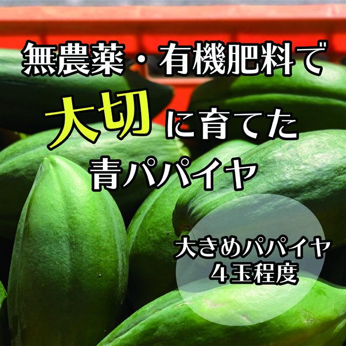 【ふるさと納税】無農薬・有機肥料で大切に育てた 青パパイヤ【大きめパパイヤ4玉程度】