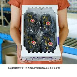 【ふるさと納税】《期間限定》沼隈ぶどう「ピオーネ」2kg(種なし) F21L-179 画像2