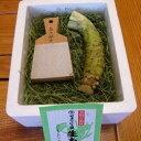 【ふるさと納税】芸州吉和村 植本わさび本舗 生わさび ときめき初体験セット
