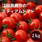 グリーンファームトマト