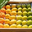 柑橘カラフルギフトセット