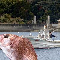 【ふるさと納税】F-4  堂浦 釣り船体験:徳島県鳴門市