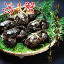 【ふるさと納税】川の最高級食材 もくず蟹(天然活き)※7月頃...
