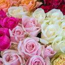 【ふるさと納税】OKM04 日本一に輝いた阿波のバラをお届け...
