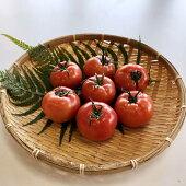【ふるさと納税】MRN01【味自慢の土耕栽培】海部清流トマト12玉セット