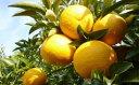 【ふるさと納税】低温貯蔵 特選甘夏柑10kg 【みかん・柑橘類・フルーツ】 お届け:2019年6月上旬〜6月下旬まで