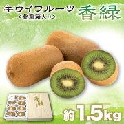 【ふるさと納税】キウイフルーツ香緑約1.5kg化粧箱入りキウイご贈答フルーツ