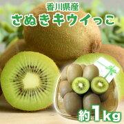 【ふるさと納税】さぬきキウイっこ約1kgキウイフルーツ