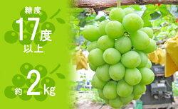 【ふるさと納税】 約1.5kg シャインマスカット 讃岐育ちのフルーツ ・ぶどう 旬 高級 ブドウ 人気 果物 夏 【果物類・ぶどう・マスカット・フルーツ・果物】 お届け:2020年8月下旬〜9月下旬・・・ 画像1