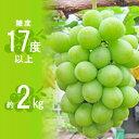 【ふるさと納税】 約1.5kg シャインマスカット 讃岐育ちのフルーツ ・ぶどう 旬 高級 ブドウ 人気 果物 夏 【果物類・ぶどう・マスカット・フルーツ・果物】 お届け:2020年8月下旬〜9月下旬・・・