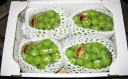 【ふるさと納税】 約1.5kg シャインマスカット 讃岐育ちのフルーツ ・ぶどう 旬 高級 ブドウ 人気 果物 夏 【果物類・ぶどう・マスカット・フルーツ・果物】 お届け:2020年8月下旬〜9月下旬・・・ 画像2