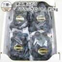 【ふるさと納税】新品種ぶどう「ブラックビート」 約2kg