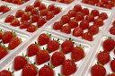 【ふるさと納税】902 苺音エコノミー~いっぱいのさぬきひめいちご~約1.2kg