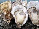 【ふるさと納税】(予約受付中:旬にお届け!2020年1月からの期間限定出荷!)多度津 白方 殻付き活牡蛎カンカン焼セット 約3kg (加熱用)〔提供:株式会社 牡蛎屋りょうせん〕