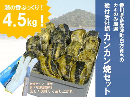 (予約:旬にお届け!2018年4月までの期間限定出荷!)殻付き活牡蛎カンカン焼セット 4.5kg (加熱用)〔提供:株式会社 牡蛎屋りょうせん〕
