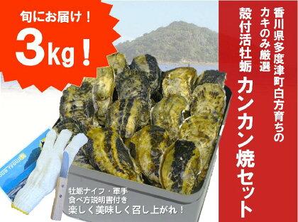 】(予約:旬にお届け!2018年4月までの期間限定出荷!)多度津 白方 殻付き活牡蛎カンカン焼セット 約3kg (加熱用)〔提供:株式会社 牡蛎屋りょうせん〕