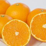 【ふるさと納税】ミヤモトオレンジガーデンの「清見」約5kg【1044409】