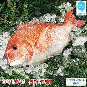 【ふるさと納税】愛媛県産養殖真鯛フィレ2枚(お頭付き・冷凍)お刺身で!焼いて!煮て食べ鯛! 新鮮・安心