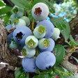 【ふるさと納税】無農薬栽培完熟生ブルーベリー800gと無添加「完熟手作りブルーベリージャム」(180g入)3個のセット