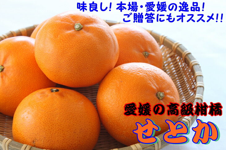 【ふるさと納税】愛媛県産「せとか」