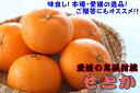 【ふるさと納税】美味!高級柑橘!! 愛媛県産「せとか」(贈答用としてお使い頂ける品です!)※1月下旬?3月下旬頃に順次発送予定