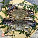 【ふるさと納税】<瀬戸内の渡り蟹 2匹 500〜600g> ...