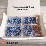 ブルーベリー生果1KG【多品種ミックス】