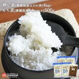 押し麦(愛媛県産はだか麦)4kg+もち麦(愛媛県産ダイシモチ)500g