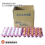 名水育ち愛媛県西条市産紅白たまごたっぷり40個×4カ月定期便