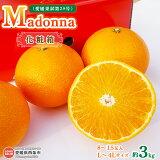 Madonna(愛媛果試第28号)約3kg化粧箱L〜4Lサイズ8〜15玉入