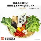 <西条名水育ちの新鮮野菜とお米の食卓セット>(旬のお野菜とお米セット)