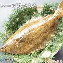【ふるさと納税】<ハーブ媛ひらめラウンド 1尾(1kg以上)...