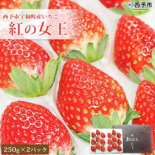 【ふるさと納税】<西予市宇和町産いちご 紅の女王500g(250g×2パック)>※2020年11月中旬から順次発送します。 果物 苺 イチゴ フルーツ 特産品 苺園 frago 愛媛県 西予市 【冷蔵】の画像
