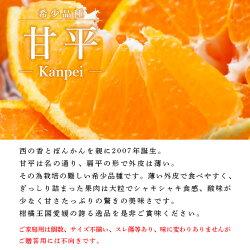 【ふるさと納税】<甘平 ご家庭用 4kg(Sから2L混合・約16〜24個入>※2021年1月下旬から3月上旬迄に順次出荷します。 訳あり 果物 フルーツ みかん ミカン オレンジ かんぺい カンペイ 特産品 愛媛県 西予市 【常温】・・・ 画像1