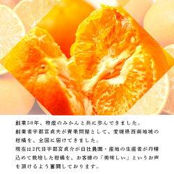 【ふるさと納税】<甘平 ご家庭用 4kg(Sから2L混合・約16〜24個入>※2021年1月下旬から3月上旬迄に順次出荷します。 訳あり 果物 フルーツ みかん ミカン オレンジ かんぺい カンペイ 特産品 愛媛県 西予市 【常温】・・・ 画像2