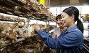 【ふるさと納税】肉厚どんこ椎茸の収穫体験