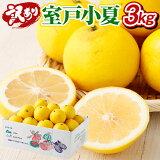 【ふるさと納税】【訳あり】室戸小夏3kg 柑橘 フルーツ 果物 送料無料<RK048>