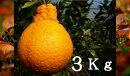 RK14デコポン3kg