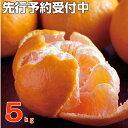【ふるさと納税】RK031【訳あり】ポンカン5kg フルーツ