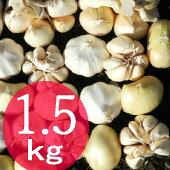 【ふるさと納税】【訳あり】にんにく1.5kg<RK074>