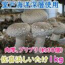 【ふるさと納税】佐喜浜しいたけ(約1kg) 野菜 送料無料 <NC002>