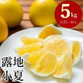 【ふるさと納税】熟成露地小夏5kg柑橘フルーツ果物送料無料<ME002>