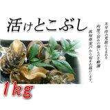 【ふるさと納税】UO014活けとこぶし(1kg)