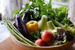【ふるさと納税】14-12:まる弥カフェ朝どれ野菜のサラダセット