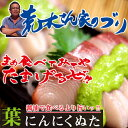 【ふるさと納税】脂の乗った旨いブリを高知の食べ方、葉ニンニクぬたで!