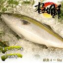 【ふるさと納税】魚 鰤(ぶり) ブランド「丸ごと一本!ブランド鰤「極みブリ」4〜5kg(下処理有)」お正月にも! 産地直送 送料無料