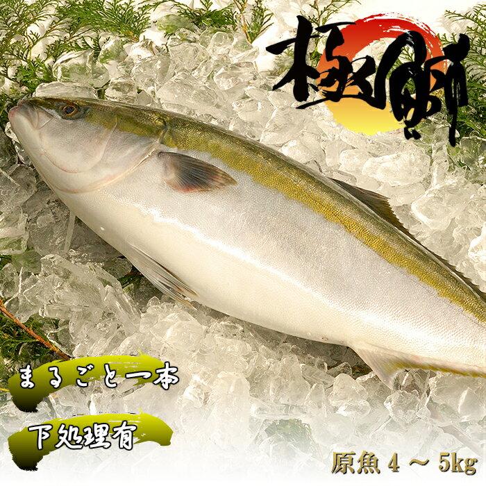 【ふるさと納税】魚 鰤(ぶり) ブランド「丸ごと一本!ブランド鰤「極みブリ」4〜5kg(下処理有)」 産地直送 送料無料